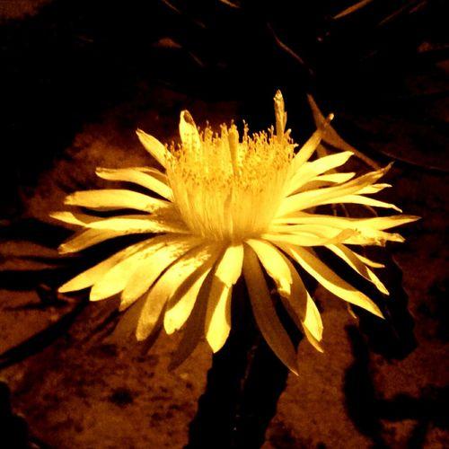 flower Flower Espinozas Plants 🌱 Plant Plants
