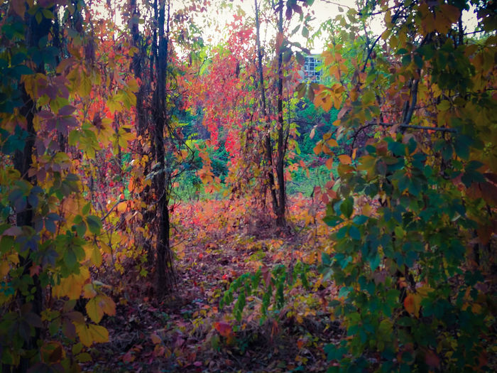 Tree Forest Tranquility Autumn Non-urban Scene Nature Beauty In Nature Multi Colored Red Green October2016 Segrate Tree Forest Tranquility Tranquil Scene Autumn Tree Trunk Scenics Non-urban Scene Nature Branch Growth Change Beauty In Nature