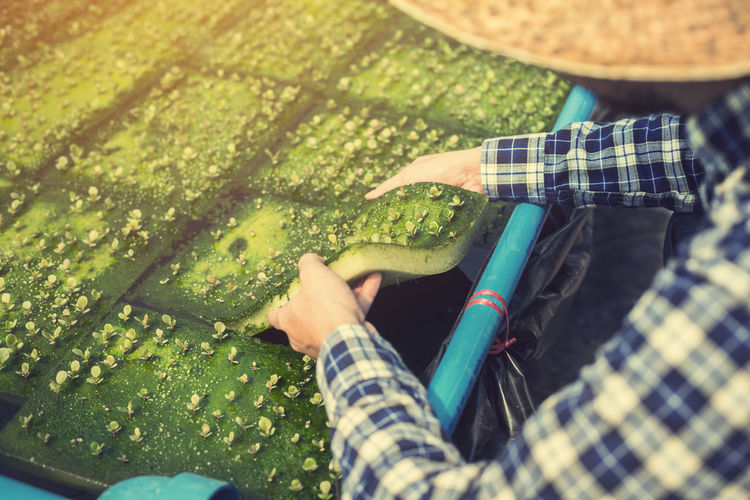 Cropped Image Of Male Farmer Growing Crops In Greenhouse