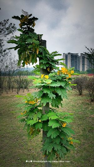 Iphone6plus Taking Photos Shenzhen My Photos Enjoying Life Landscape Spring Is Coming  On The Road Nature Good Night,