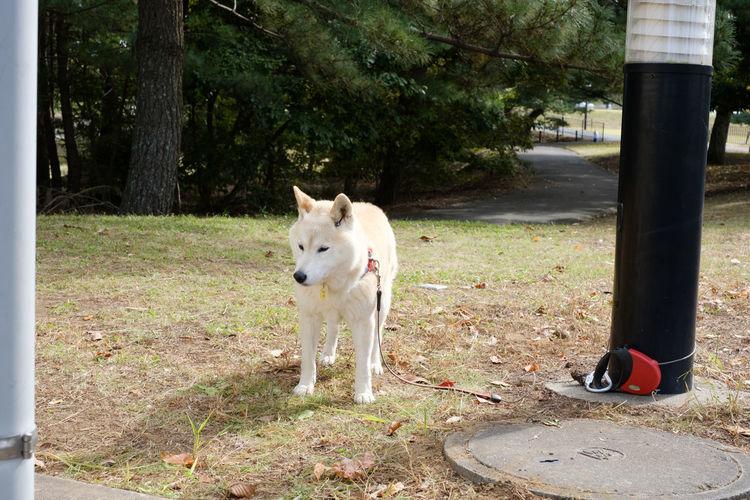 わんこ/Dog Animal Themes Dog Doggy Domestic Animals Fujifilm FUJIFILM X-T2 Fujifilm_xseries Mammal No People One Animal Pets X-t2 わんこ 犬 狗