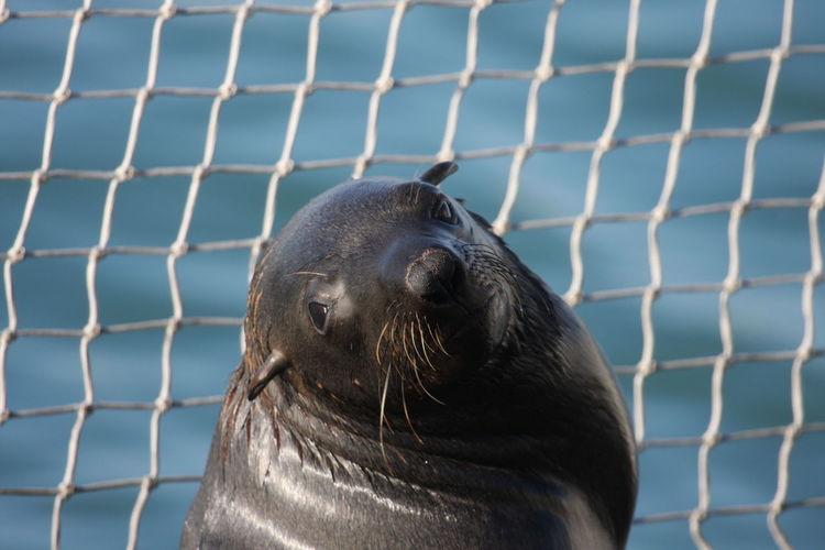 Close-up of seal at zoo