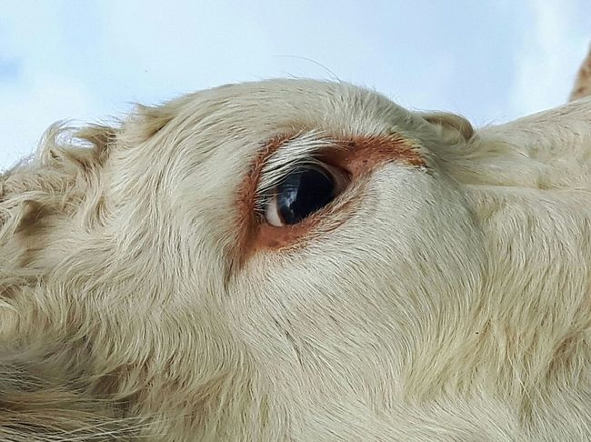 Animal Portrait Pets Portrait Close-up Animal Body Part