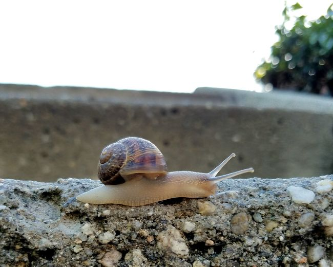 Animal Shell Shell Zoology Close-up Nature Beauty In Nature TakeoverContrast Snail