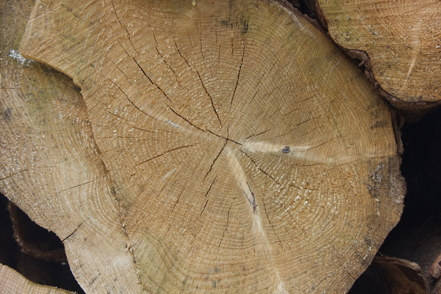 Brennholz Stapel Holz Holzindustrie Backgrounds Close-up Cross Section Day Deforestation Full Frame Log Lumber Industry Nature No People Outdoors Rough Sägewerk Textured  Timber Tree Tree Ring Tree Stump Tree Trunk Wood - Material