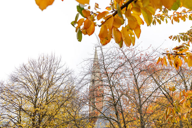 Autumn in London Tree Autumn Plant Branch Change Sky Low Angle View Leaf Nature Growth Plant Part Day Beauty In Nature No People Orange Color Outdoors Tranquility Clear Sky Scenics - Nature Yellow Fall Leaves Tree Canopy  Travel Destinations London Autumn Mood