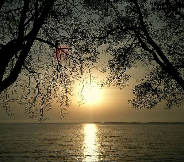 Sunset Le Coucher Du Soleil Закат Silhouette силуэт Sea Seafront Trees Pastel Power