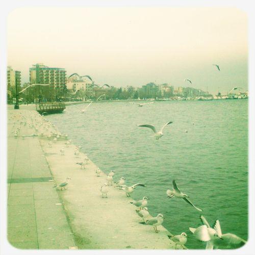 Autumn Sea Seagulls Flying