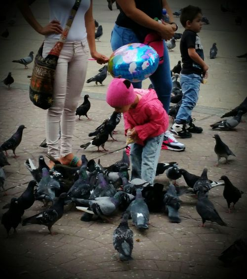 50 Shades Of Grey Feeding Pigeons Pigeons Birds Child Feeding Pigeons In The Park Plaza De La Cultura San Jose, Costa Rica