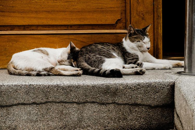 Cats sleeping on retaining wall