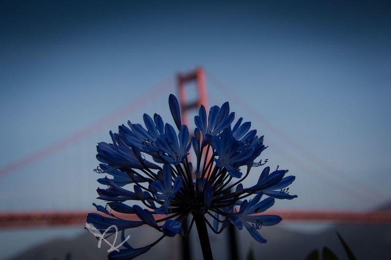"""Love of beauty is taste. The creation of beauty is art.""-Ralph Waldo Emerson // Golden Gate Bridge San Francisco California Check This Out Hello World Taking Photos Enjoying Life EyeEm Best Edits Eye4photography  Popular Photos"