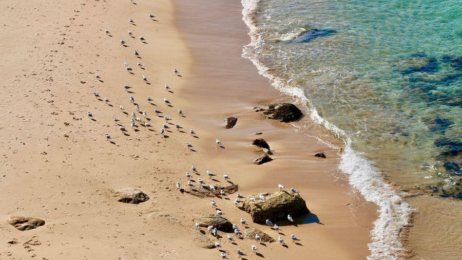 Gulls at Bondi