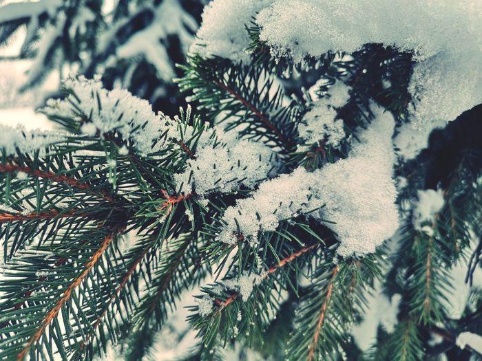 Tree Christmas Close-up