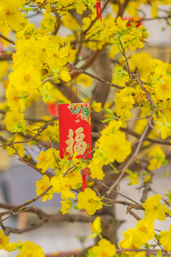 Close-up of yellow flowering plant hanging on tree