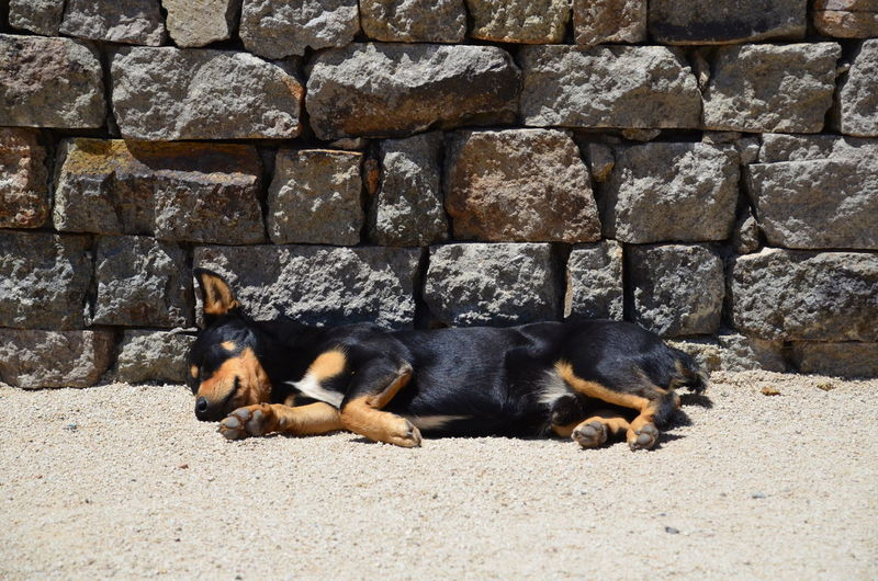 View of a sleeping dog