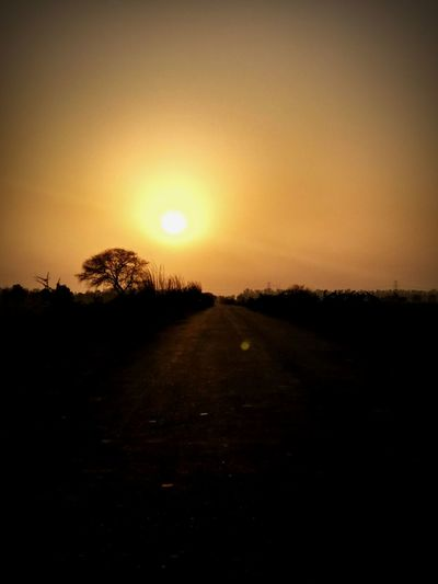 Sunset Tree Nature Beauty In Nature No People Landscape Road Golden Hour Roadtosunset Incredible India