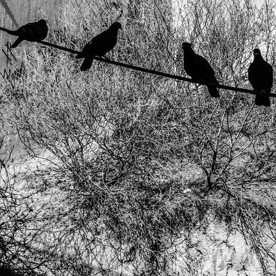 Stool pigeons Check This Out Hello World Good Morning Enjoying Life Relaxing Hi! Taking Photos Sun Blackandwhite Global Photographers Alliance Global Photographer Works Exhibition Global Photographer-Collection
