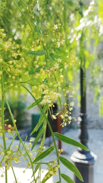 Nature Plant Green Color Tree Leaf Growth Outdoors Day No People Branch Beauty In Nature Flower Close-up Greenhouse
