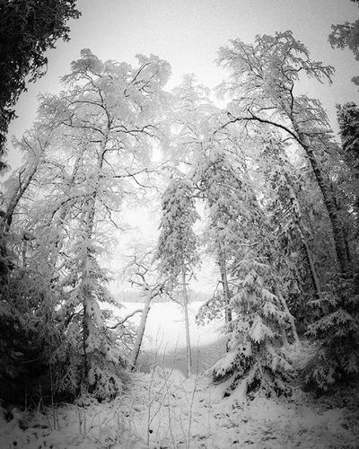 And back to winter. On cloydy day it doesn't matter if you take your photos in color or monochrome: they're gonna be black and white anyway. 😀 Shotoncanon Canonphotography Canon_photos Tree_magic Tree_brilliance Landscape Winter Blackandwhite Bw Finland Visitfinland