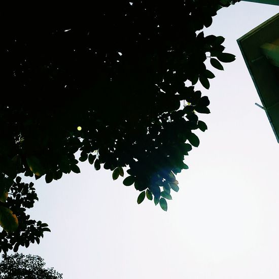 Binicol Tree Green