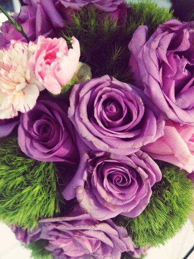 Flower Rose - Flower Purple