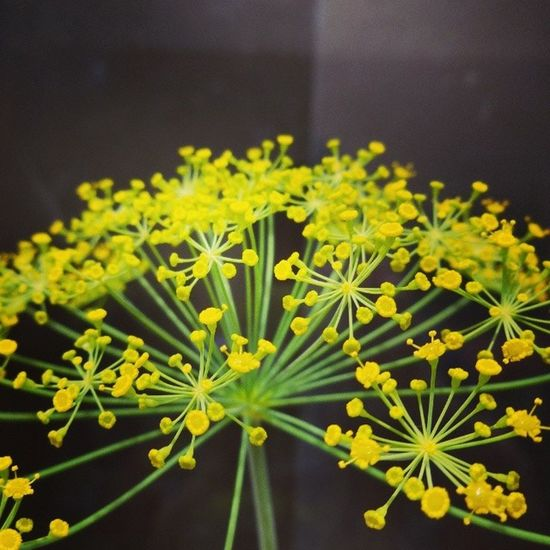 Yellow flower Flowerstagram Flower Yellow Macro Cool Artistic Amazing Awesome Closeview Sony Cybershot Garden Fantastic Follow Camera Extra Italy Lonigo Nature Nice Small