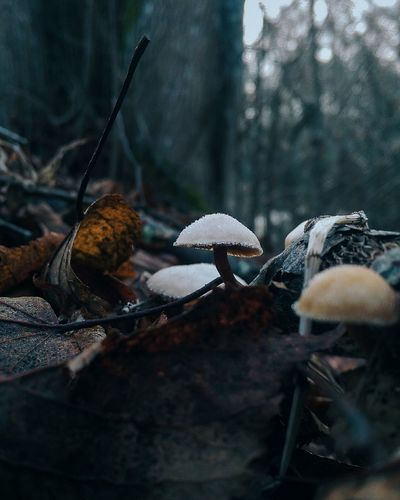 Mushrooms Growing At Forest