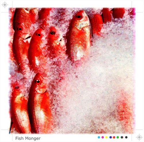 Process Project Fish Red IPhoneography Ice Fresh Fish Fresh Taking Photos