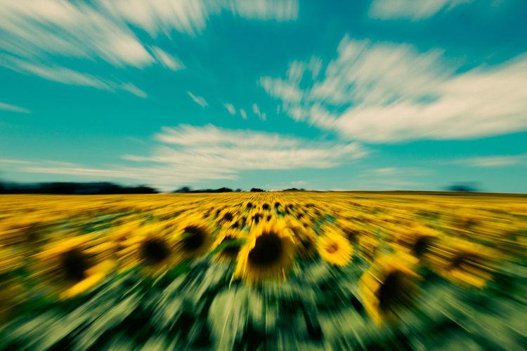 Sunflower Smack