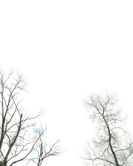 Tree Branch Low Angle View Nature Silhouette Treetop No People Sky Snowflake Day Outdoors Beauty In Nature