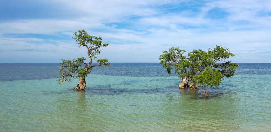 Siquijor Island, Philippines (July 2016) Colour Of Life Mangrove Trees Siquijor Island Visayas Philippines Island Life Beach Life Island Hopping Summer Summer Getaway Marine Conservation Environment Conservation Protection Ocean Sea Estuary It's More Fun In The Philippines Summer Travel Tourism
