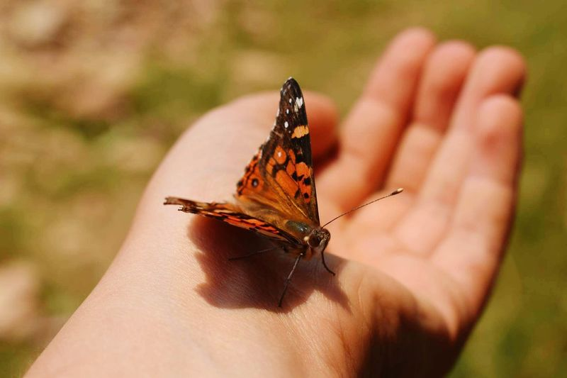 Close-Up Of Butterfly Perching On Hand