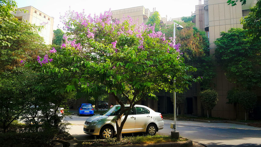 Architecture Car City Day Flower Growth Land Vehicle Mode Of Transport Nature No People Outdoors Plant Transportation Tree