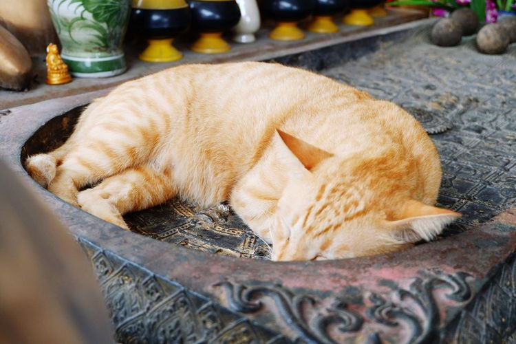 cat แมว แมวหลับสบาย Thailand Bangkok Pets Pets And Animals Pets Photography Petslife Animal Love EyeEm Selects Pets Relaxation Lying Down Animal Themes Cat Stray Animal Sleeping At Home