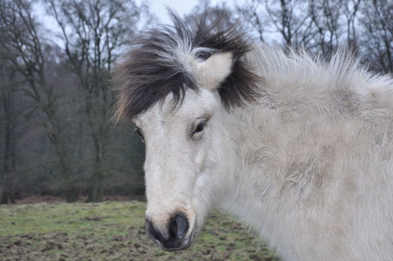 Close-up of pony on field