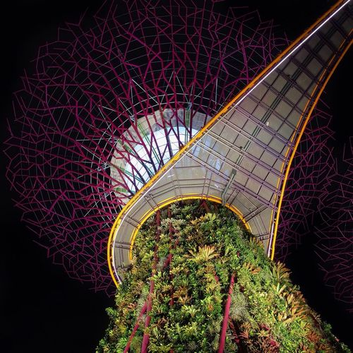 Supertree Hello World Check This Out Singapore Artificial Trees The Architect - 2016 EyeEm Awards Envision The Future Night Lights