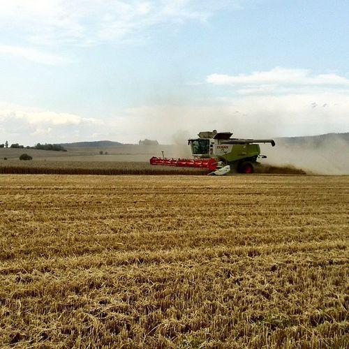 žně Pásový Kombajn nelze nevidět... 🙊 Harvest Harvesting Corn Grain Countryside