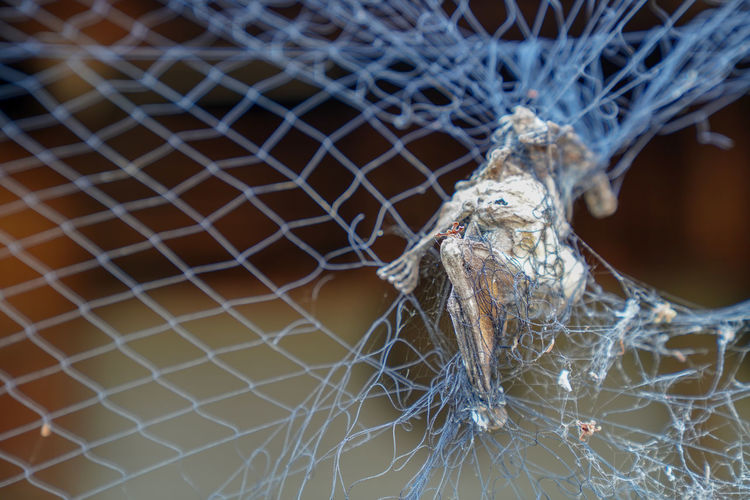Close-up No People Focus On Foreground Spider Web Fragility Selective Focus Pattern Security Vulnerability  Nature Day Outdoors Protection Metal Fence Safety Spider Damaged Full Frame Web Complexity Trapped Net