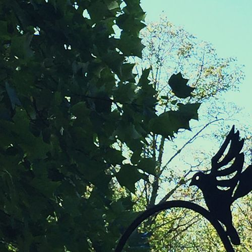 Low Angle View Outdoors Birdsofinstagram Birds Of EyeEm  Nature Green No People Day No Filter, No Edit, Just Photography Birds Eye View Bird Resting .. Abstract Metal Figure Versus Natural Growth