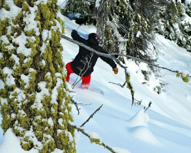 Out in the mossy oaks. Athlete Skiing Winter Activities Action Shot  Outdoor Pursuit Active Lifestyle  Lifestyles Backcountry Moss Mossy Mossy Tree Snowboard Carving Foliage Activity Strength Snow Winter Cold Temperature Winter Sport Full Length Tree One Person Snowboarding Warm Clothing Mountain Only Men Nature One Man Only Outdoors Shades Of Winter