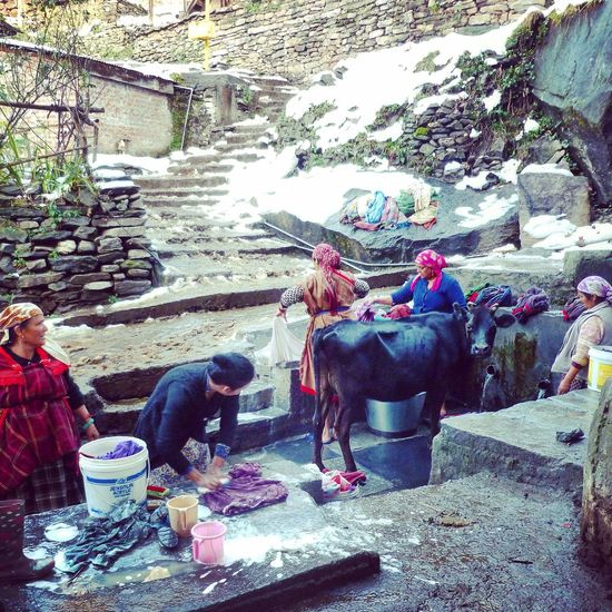 Cows helping with the laundry! Capturing The Moment Cow Doing The Laundry EyeEm EyeEm Best Edits EyeEm Best Shots EyeEm Gallery Happy People Himachal Pradesh India Lifestyles Manali Outdoor Pictures People Simple Way Of Life Snow Street Photography The Street Photographer - 2016 EyeEm Awards The Week On EyeEm Traditional Culture Women Women Washing