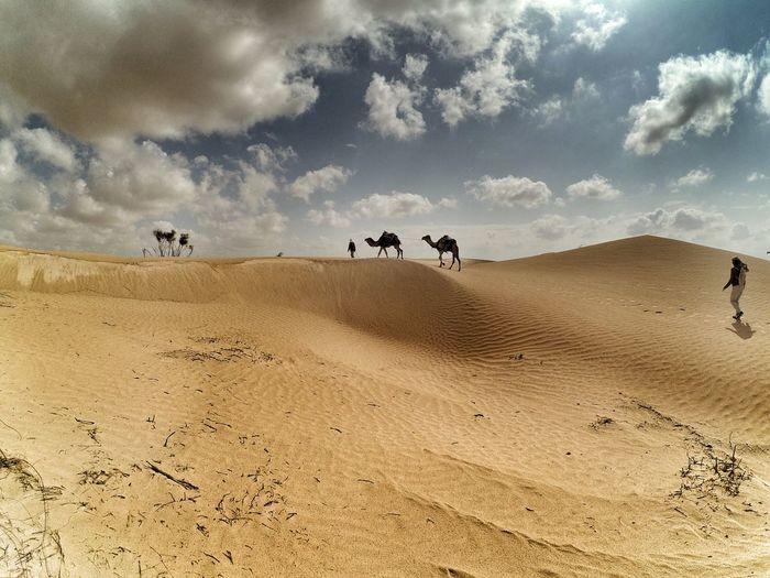 Desert Beauty South Tunisia Sky Cloud - Sky Sand Landscape Nature Sand Dune Day EyeEmNewHere