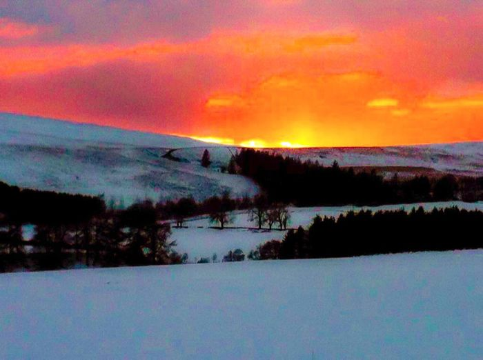 Scottish winter Outdoors Snow Winter Cold Temperature Beauty In Nature Scenics Landscape Tranquil Scene No People Trees Orange Sky Against The White Snow Fresh EyeEm Landscape Perthshire Alyth