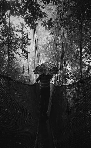 Heavy Rainfall Norirwandyariffin Kotakinabalu Hereandthere Travel Moment Fujifilm Fujifilm_xseries Tree Real People One Person Tree Trunk Nature Day Outdoors Heavyrain Umbrella Canopy Walk