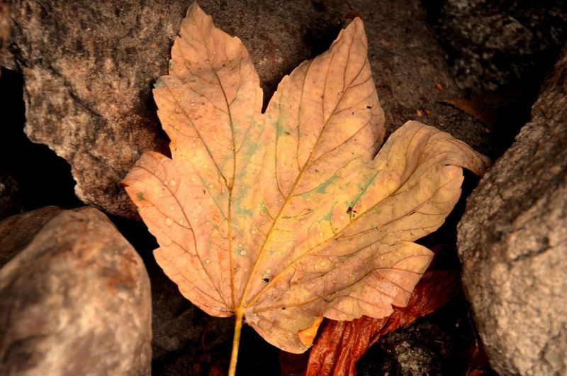 High angle view of maple leaf on tree