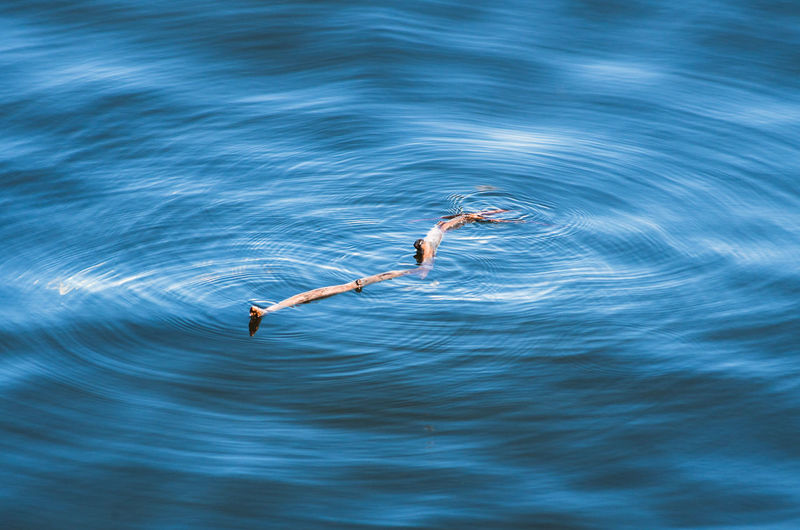 High angle view of stick in sea