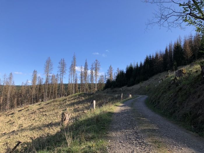 Road amidst trees on field against clear sky