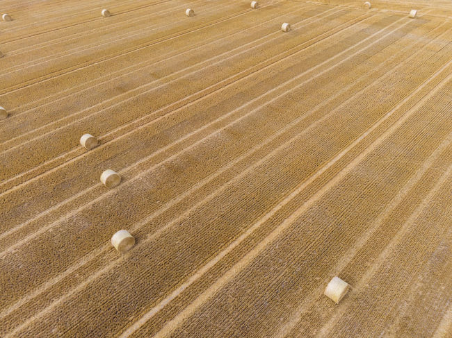 After harvest Hay Bale Lines Straw Bale Aerial Photography Aerial View Agriculture Day Dronephotography Field Gold Colored Harvest High Angle View Land No People Straw