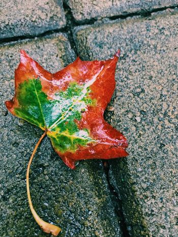Leaf Autumn Nature Day Outdoors Beauty In Nature No People Red Green