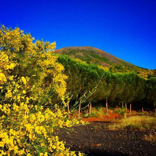 Enjoying The Sun Nature Landscape Vesuvio estate Ginestre volcano summer